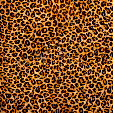 leopard fabric leopard fabric stock photo image of fuzzy leather brown 4984982