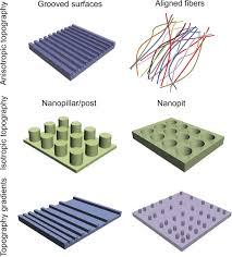 matrix nanotopography as a regulator of cell function jcb