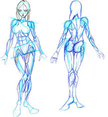 How To Draw Female Anatomy Learning To Draw Human Body