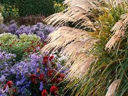 landscaping with miscanthus sinensis japanese silver grass
