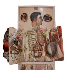 Human Anatomy Atlas The Apotheosis Of The Dissected Plate U2013 Circulating Now From Nlm