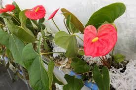 Polyester Flowers - growing flowers using polyester soil in japan hortibiz