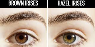 what causes eyes to be sensitive to light 8 interesting facts about hazel eye color you should know the blumile