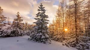 download 2560x1440 snow winter sunset pine tree wallpapers for