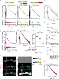 figures and data in fluorescence lifetime imaging microscopy