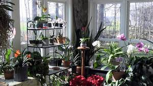 the sunroom at its finest an indoor garden in bloom youtube