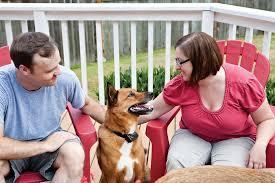 Dog Patio Dog Restaurant Etiquette Petsafe Articles