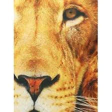 lion print yellow s lion print crew neck sweatshirt rosegal com