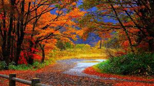 autumn wallpaper fall inspiration pinterest autumn nature
