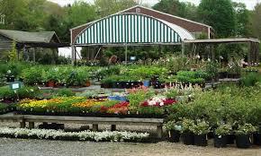 Buy Planters Plants To Buy Near Me Darxxidecom