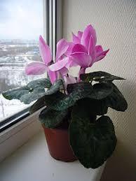 houseplant wikipedia