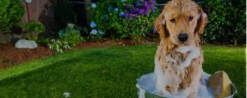 4 worst pet grooming gadgets qc pet studies