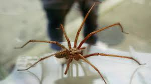 a hobo didn u0027t just find a giant hobo spider sqwabb