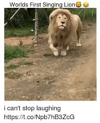 Lion Meme - worlds first singing lion i can t stop laughing httpstconpb7hb3zcg