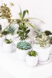 Table Top Herb Garden Tiny Cactus Decor Gift Ideas Small Garden Ideas