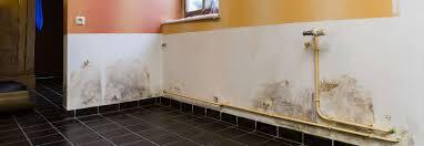 moisissure mur chambre moisissures batiprosec traitements contre l humidité