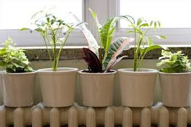 what are the differences between indoor plants u0026 outdoor plants