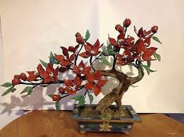 47 best jade trees images on bonsai