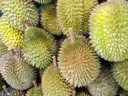 List Of Tropical Plants Names - tropical rainforest plants list information pictures u0026 facts