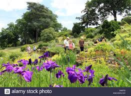 Rock Garden Society Iris Barr Purple East Iris Ensata Rock Garden Royal