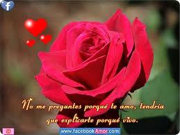 bonitas de rosas rojas con frases de amor imagenes de amor facebook imagenes de rosa rojas con frase de amor imágenes bonitas para