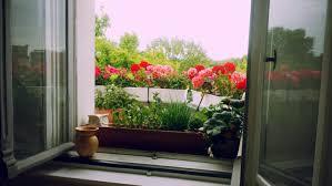 geranien balkon gardening auf fensterbrett und balkon geranien berlin