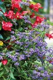 100 plants that need little light 17 low maintenance plants