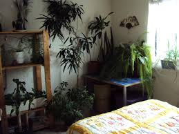 Plants For Bedroom Bed Best Plants For Bedroom