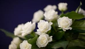funeral flower what is the best funeral flower etiquette how to write a eulogy