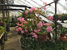 succulent house peckham u0027s greenhouse the tropical and succulent house album on