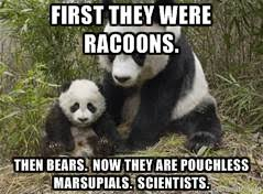 Panda Meme - panda meme by felira x nyxa on deviantart