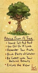 best 25 tree quotes ideas on pinterest quotes on fear reason