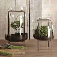 glass terrariums west elm