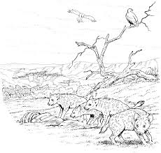 coloring page hyena coloring page hyena coloring pages u201a hyena