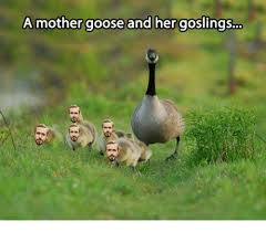 Goose Meme - a mother goose and her goslings dank meme on me me
