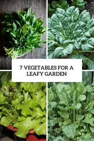vegetable garden archives gardenoholic
