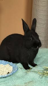 how to choose a pet rabbit 12 steps with pictures wikihow