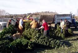 christmas tree recycling tree chipping fund raiser for camp