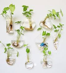 set of 9 wall hanging glass terrarium air plant vase home office