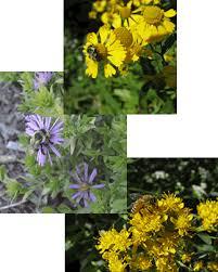 making a bee friendly garden beespotter university of illinois