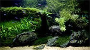 japanese aquascape aquascaping aquarium meets terrarium in the japanese inspired