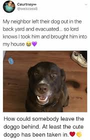 Cute Memes For Him - courtneyoo my neighbor left their dog out in the back yard and