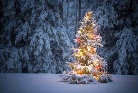 Lighted Outdoor Christmas Displays by Lighted Outdoor Christmas Trees Sacharoff Decoration