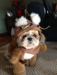 Ewok Dog Halloween Costume Hood Fur Dog Halloween Costume White Lighter Brown Trim