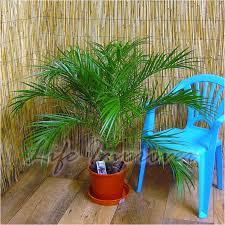 Palm Tree Outdoor Rug Palm Tree Rug Uk Creative Rugs Decoration