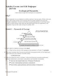 26 ecological pyramids natalia food web herbivore