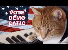 Keyboard Cat Meme - utv ghana videos