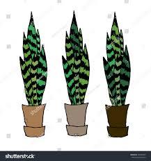cute vintage doodles indoor plants vector stock vector 528784030