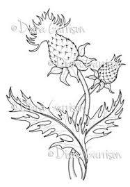 biomedicalephemera cirsium lanceolatum now cirsium vulgare