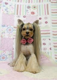 joypia yorkshire haircuts 20 adorable yorkie haircuts yorkie hair styles to try right now
